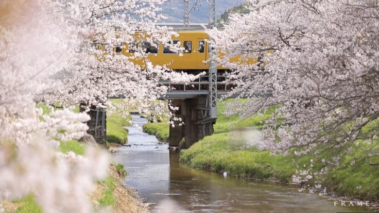 2019年 松江の桜