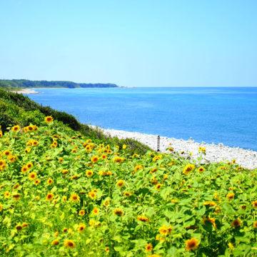 0722   琴浦町 鳴り石の浜