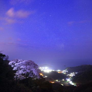 1071    松江市 天狗桜
