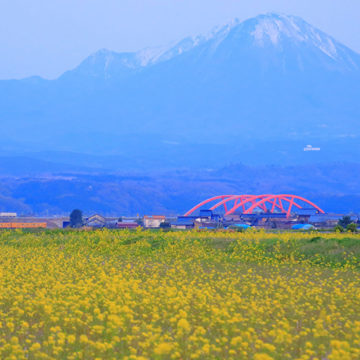 1269 米子市 菜の花畑と大山と電車